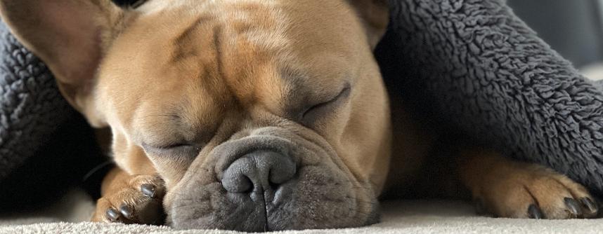 Einrichtungsideen für das Leben mit Hund
