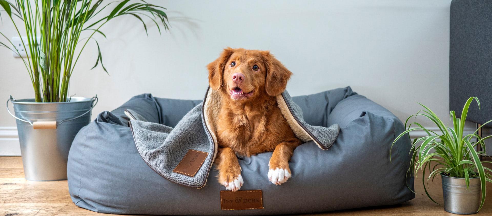 Einrichtungstipps für Tierbesitzer