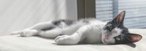 Tierische Alltagsgefährten – Umfrage: Knapp ein Drittel der Bundesbürger besitzt ein Haustier Katze ist die Nummer eins